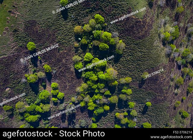 Oak forest in springtime, Remendon forest, Guriezo Municipality, Cantabria, Spain, Europe