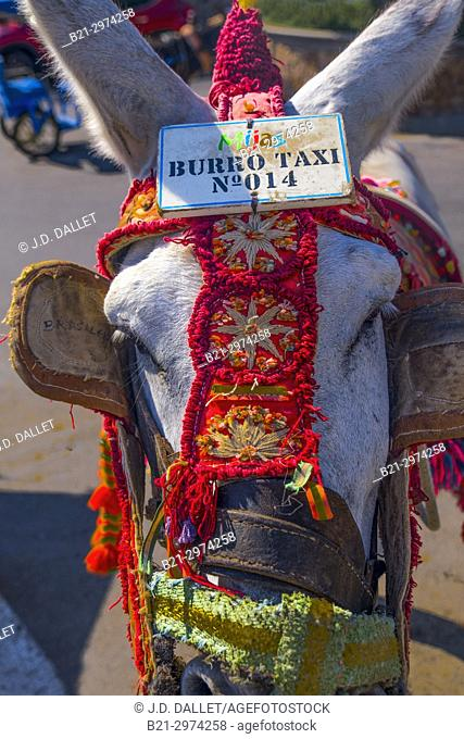 """Spain, Andalusia, Malaga Province, """"""""Burro Taxi"""""""" (Donkey Taxi) at the village of Mijas"""