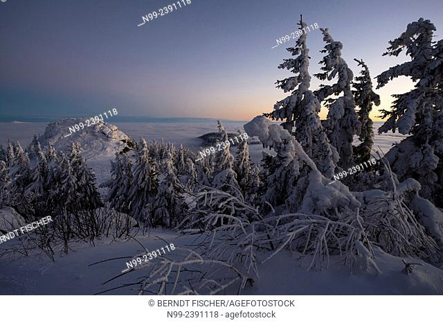 Summit of Great Arber, highest summit of the Bayerischer Wald, snow-packed spruces and rocks, sea of fog, Bavaria, Germany