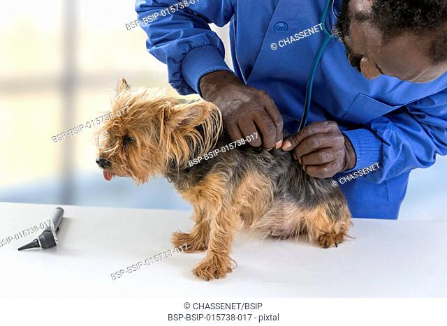 Vet's appointment