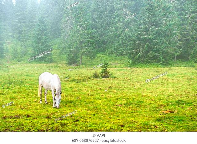White horse grazing on a green field with fog