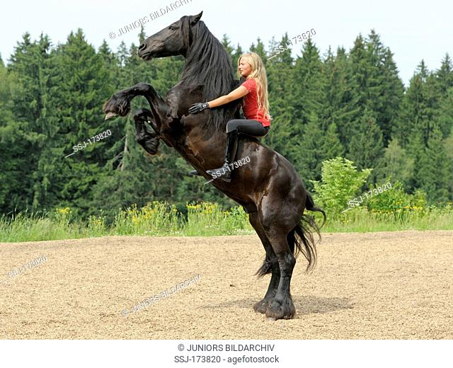 13 year old girl bareback on a rearing Friesian horse without bridle