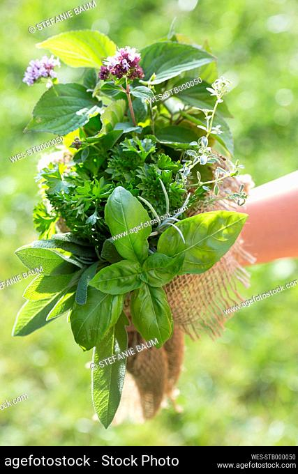 Germany, Bavaria, Girl holding bunch of fresh herbs, close up