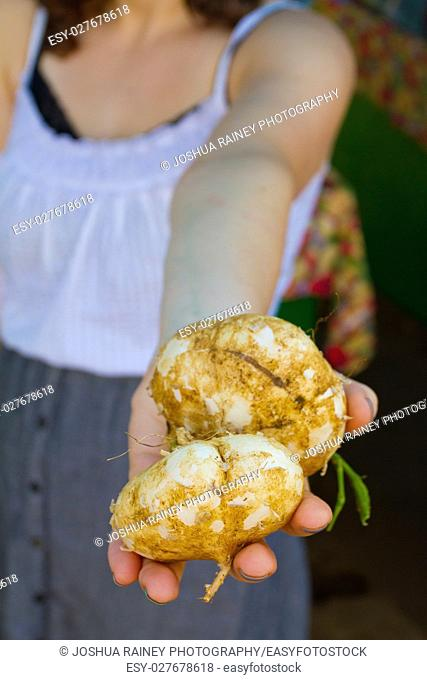 An out of focus woman holds some unique tropical Hawaiian jicama in her hand