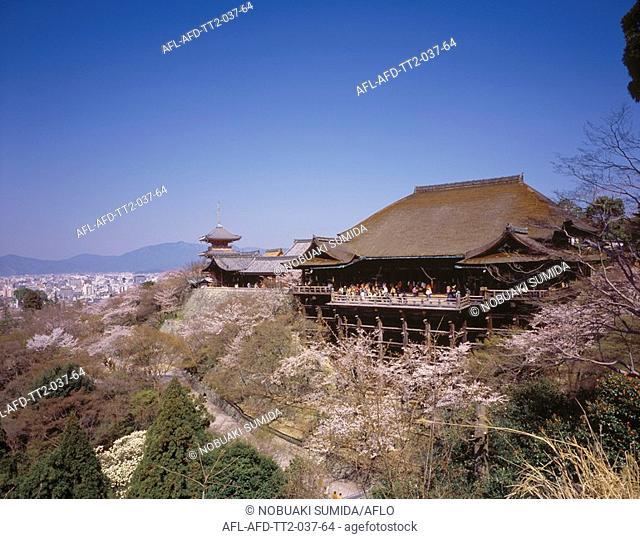 Sakura and Kiyomizu Temple, Kyoto, Japan