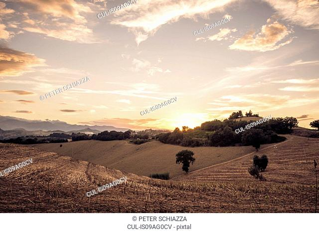 Harvested fields at sunset, La Marche, Italy