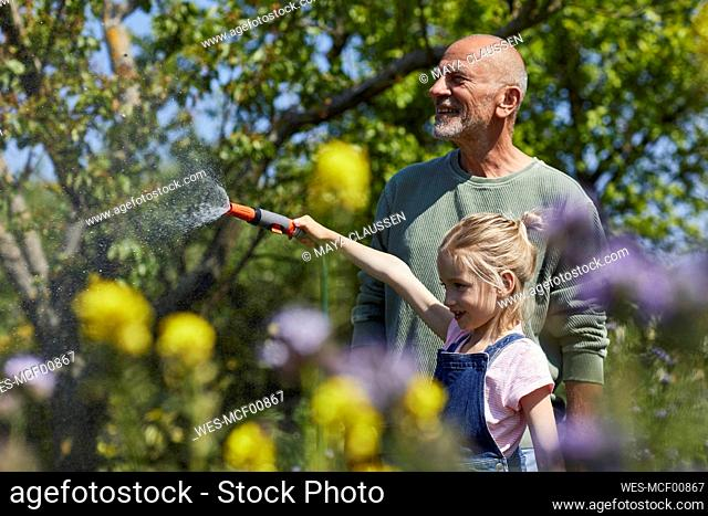 Grandfather and granddaughter watering flowers in allotment garden