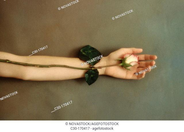 Hand gently holds a rose