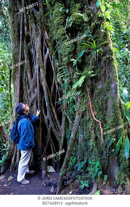 Reserva Biológica Bosque Nuboso Monteverde. Puntarenas, Costa Rica