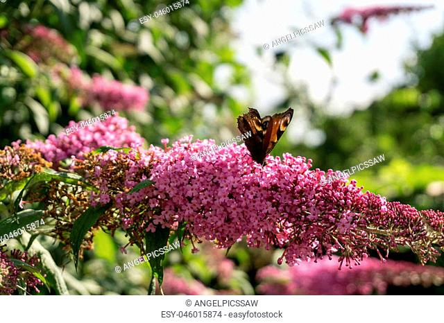 Purple flowers with butterflies at sunshine