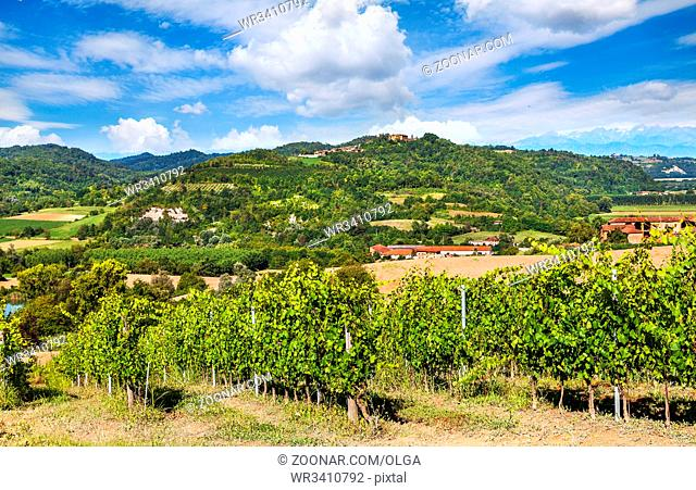 Hilly region of the Langhe with vineyards, Piedmont, Italy