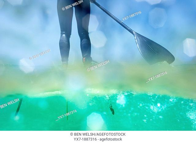 Underwater view of a person on a stand up paddle surf board