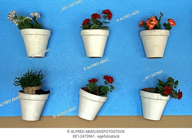Flowerpots on blue wall