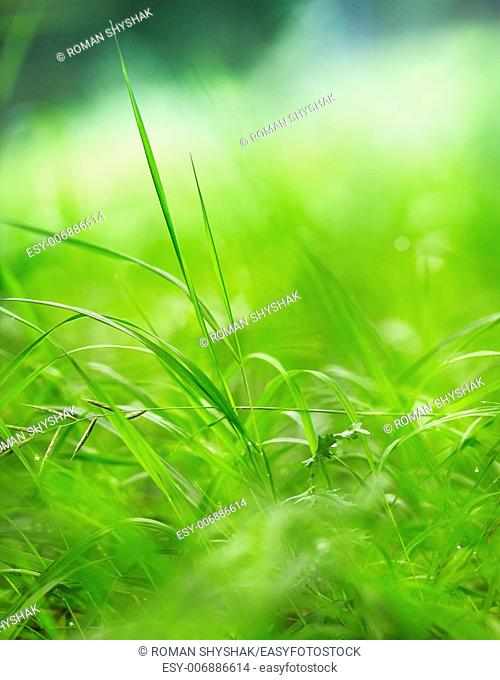 Green grass on a beautiful day. Shallow depth of field