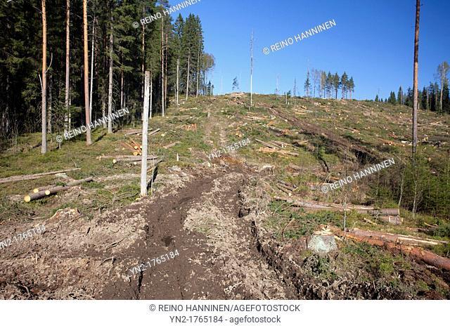 Harvester and forwarder tracks on a clear cutting area  Location Kutumäki Suonenjoki Finland Scandinavia Europe