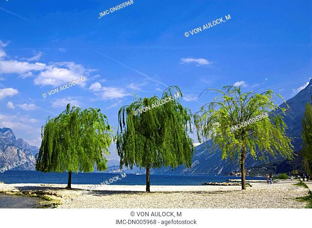 Italy, Veneto, Malcesine and lake Garda