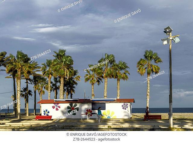 A palm trees view in Carboneras beach, Almeria, Spain