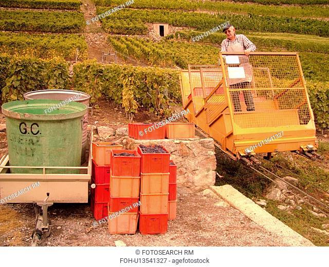 Switzerland, Europe, valais, wallis, Fully, Rhone Valley, Fendant Wine Region, wine harvest, vineyards, funicular