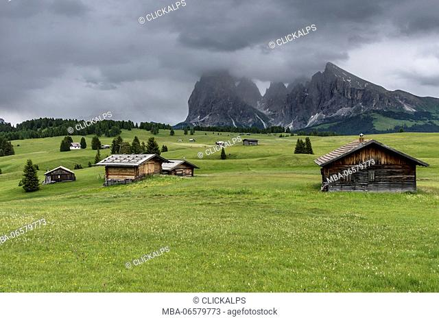 Alpe di Siusi/Seiser Alm, Dolomites, South Tyrol, Italy, View from the Alpe di Siusi to the peaks of Sella, Sassolungo/Langkofel and Sassopiatto/Plattkofel