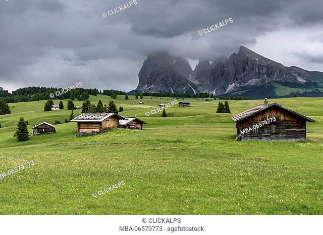 Alpe di Siusi/Seiser Alm, Dolomites, South Tyrol, Italy, View from the Alpe di Siusi to the peaks of Sella, Sassolungo/Langkofel and Sassopiatto/Plattkofel