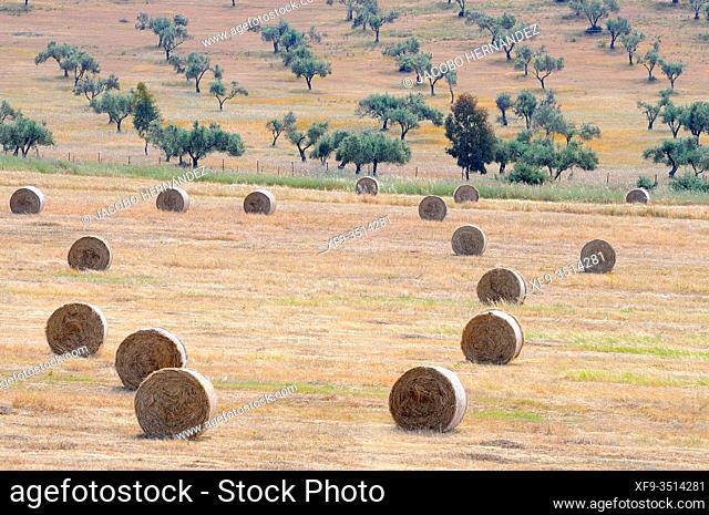 Field with packed straw. Alburquerque. Badajoz province. Extremadura. Spain