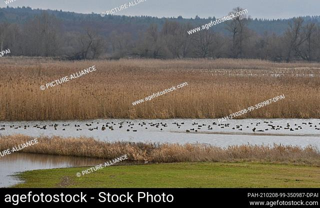 14 January 2021, Brandenburg, Criewen: The Lower Oder Valley National Park offers exciting flora and fauna all year round on its flooded floodplain meadows on...