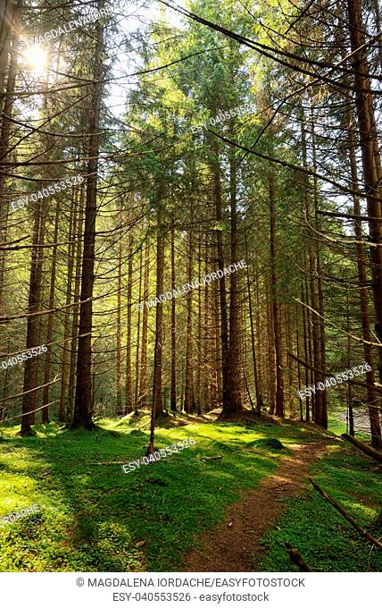 Scene Forest with Sun Rays and path