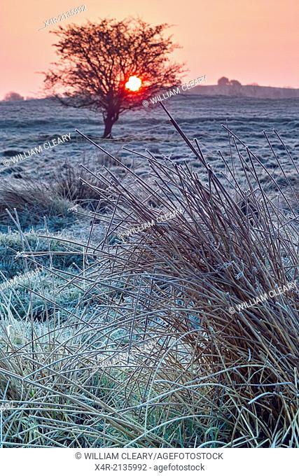 Sunrise on a frosty morning, near Loughnavalley, County Westmeath, Ireland