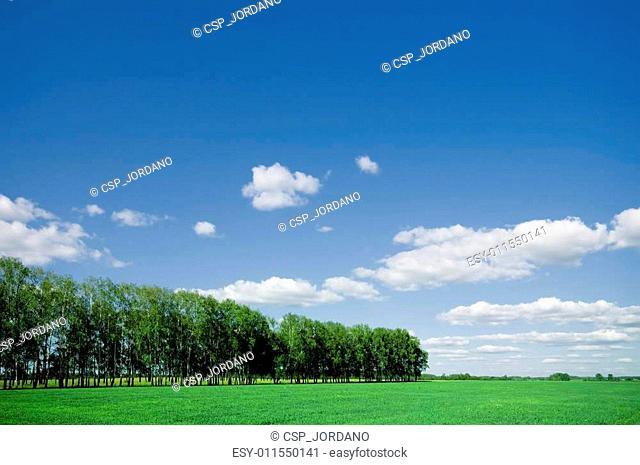 Summer landscape of green forest with blue sky