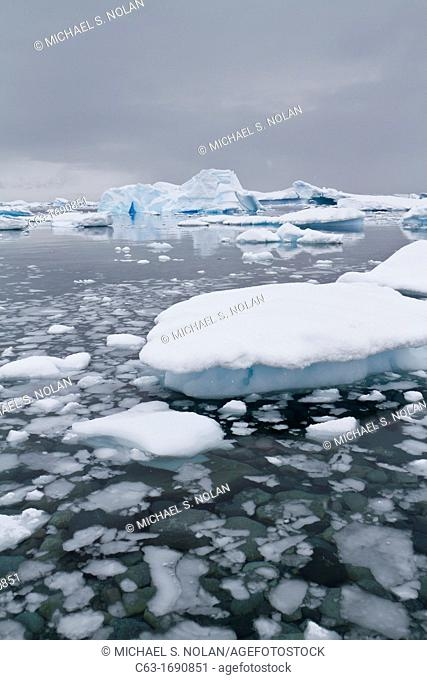 First year sea ice forming floes in Antarctic Sound, Southern Ocean