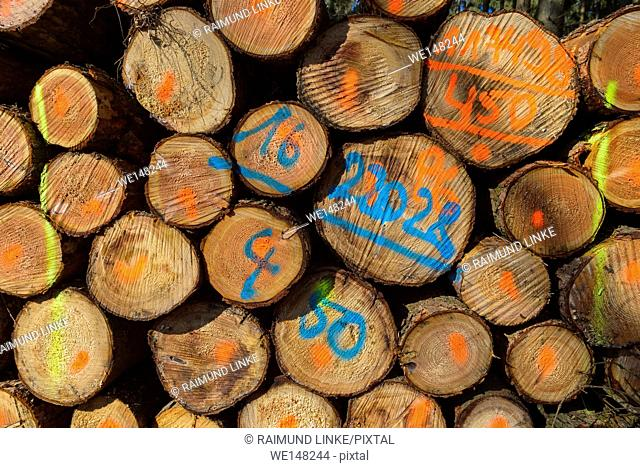 Firewood Stack with Colored Markers, Odenwald, Hesse, Germany