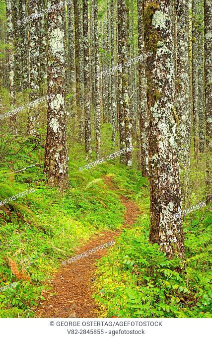 Pioneer Indian Trail, Siuslaw National Forest, Oregon