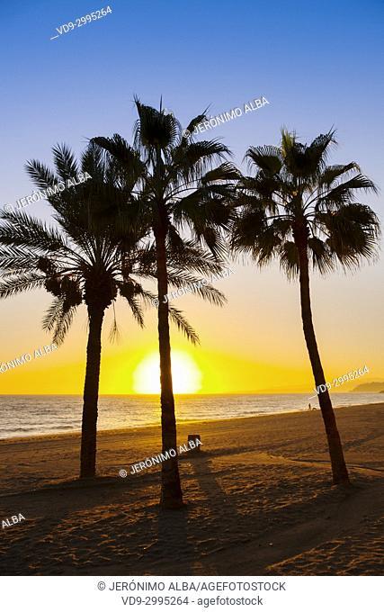 Palm trees at sunset. El Cenicero beach, El Morche, Torrox coast. La Axarquia, Malaga province. Costa del Sol, Andalusia. Southern Spain Europe