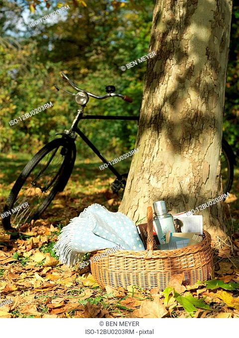 Picnic and bicycle under tree in Autumn
