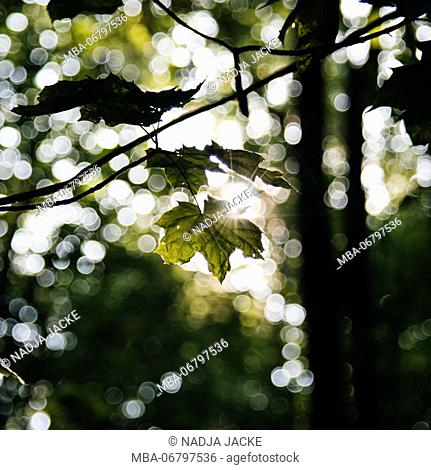 Bright green fresh foliage in the forest in the sunlight