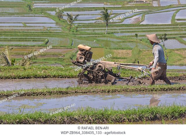 Balinese rice farmer cultivating a rice field with rice weeding machine in Jatiluwih rice terraces in Bali Indonesia