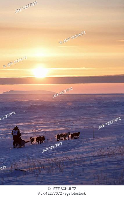 Mark Selland on the trail a few miles from Nome at sunset during Iditarod 2015