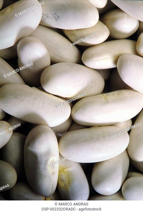 white bean grains seeds for food