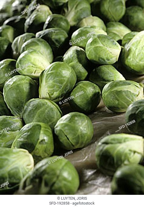 Fresh Brussels sprouts (Brassica oleracea gemmifera)