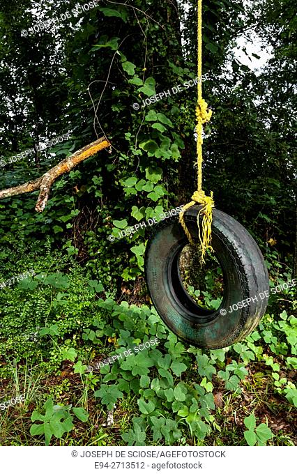 An old car tire suspended by a rope to be used as a swing in a back yard