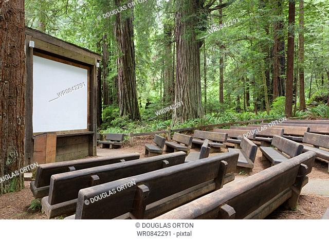 There is an open air theatre space in a clearing in Redwood National park, with benches and a white screen and podium