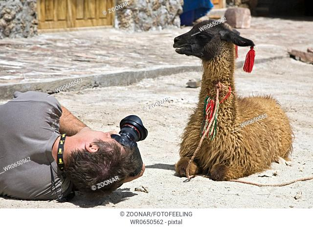 Fotograf mit Lama Lama glama