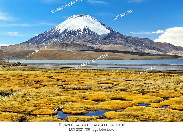 Parinacota volcano (6342 m) and Chungará lake. Lauca National Park. Norte Grande region. Chile