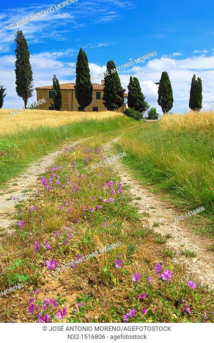Val d'Orcia  Orcia Valley  Farm with cypress trees  Fields and Farmhouses  Tuscany Landscape  UNESCO world heritage site  Pienza  Siena Province  Tuscany  Italy...