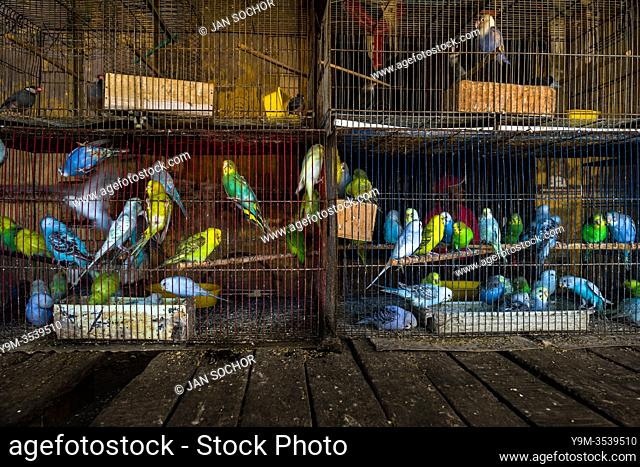 Dozens of pet birds (budgerigars parrots, java sparrows and Fischerâ. . s lovebirds) are seen inside birdcages in the bird market in Barranquilla, Colombia