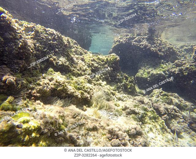 Underwater image in Las Rotas beach San Antonio cape nature reserve in Denia Alicante province Spain