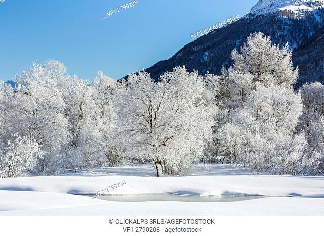 Winter landscape with trees covered in hoarfrost and frozen pond. Celerina, Engadin, Graubunden, Switzerland
