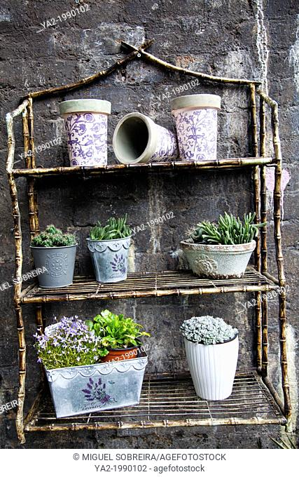 Plants on Rustic Shelving Display at Borough Market in London UK