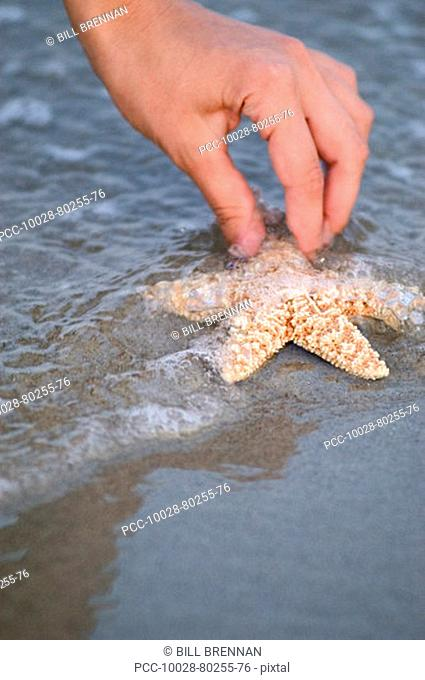 Close-up of hand picking up starfish from water at beach
