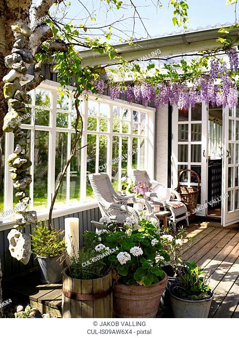Wicker chairs and purple wisteria blossoms on patio